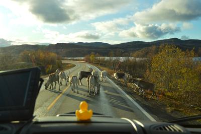 voyageurs nomades en norvège