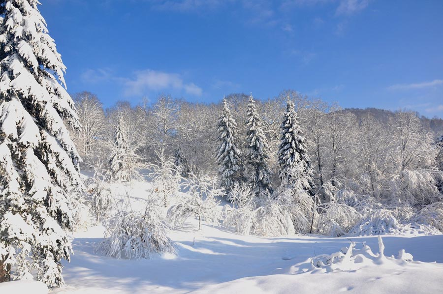 van en hiver