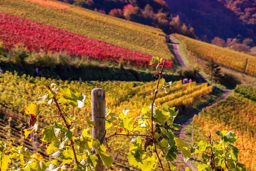 road trip en automne en Alsace