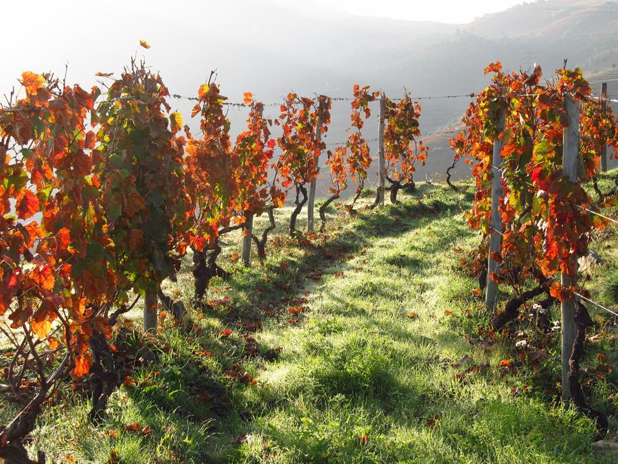 road-trip en automne au Portugal