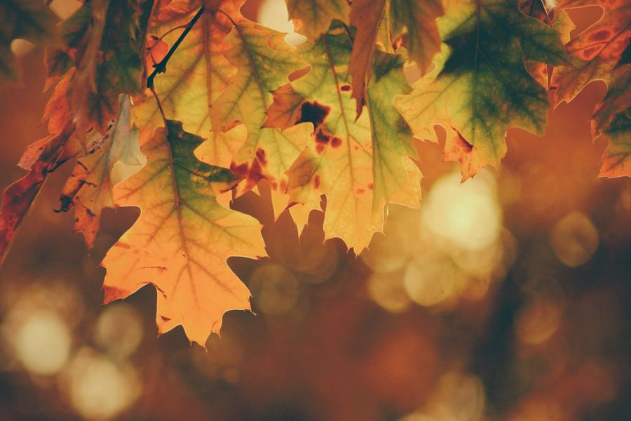 décoration pour l'automne